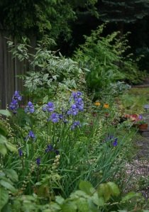 The little pops of color you see are Irises, Astrantias, and Primulas.