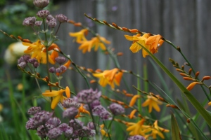 I really like the bruised purple astrantia against the shining gold of the crocosmia.