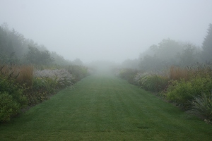 Quite enchanting to walk through the Glasshouse Borders in the mist.