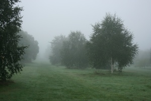It was a very quiet morning already, the mist made everything ever more still.