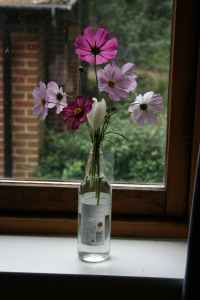 I love how perky and optimistic the cosmos are and they make good cut flowers.