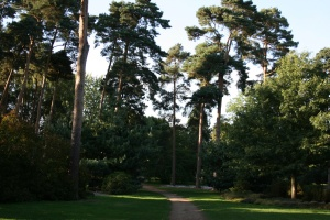 This is the Pinetum back in September.