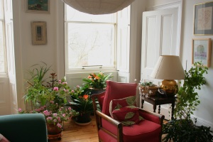 The plants growing and blooming in the living room are a wonderful sight!