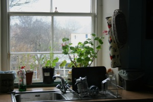 The landlady just picked the basil leaves (two pots on the left) the night before.