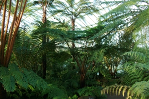 Another view of the Fern & Fossils House. RBGE