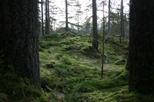 This tranquil scene is a moss sanctuary at RBGE Benmore.