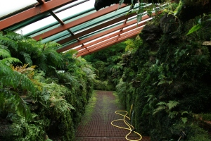 This amazing room is the Filmy Fern Room at the Glasgow Botanic Gardens.