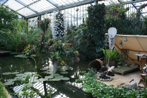 A part of the displays at the Orchids show at Royal Botanic Gardens, Kew.