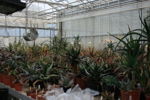 This is one part of the aloe collection.