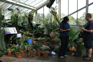 Here are the first batch of orchids waiting to be placed behind glass and out in the beds.