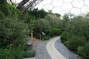 Here is one of the paths curving through the olive grove in the Mediterranean Biome.