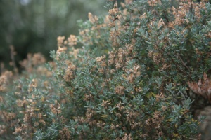 I love the surprise fragrance when I accidentally brush past a wild thyme plant in the garden.
