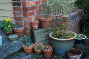 I love potted plants, but I am trying to keep them to a minimum this year, or it will be a busy summer of watering.